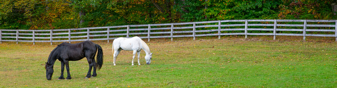 Empire stables of Putnam Valley has plenty a outdoor space or horses
