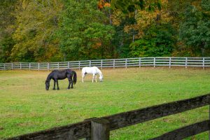 Empire Stables of Putnam Valley